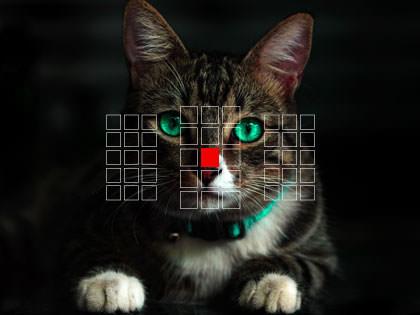 pistetarkennus kissan nenään