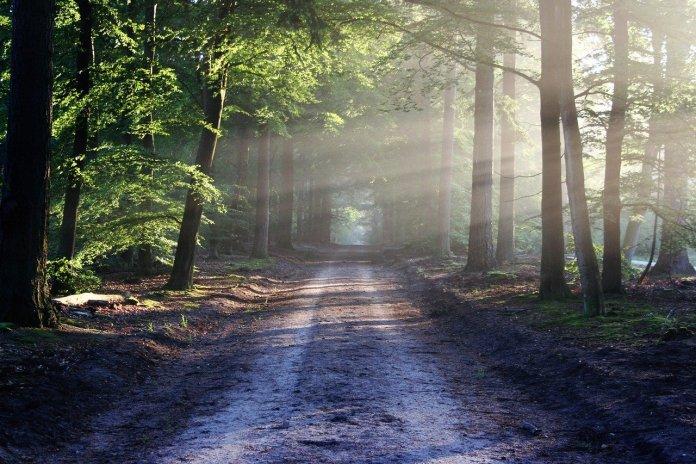 Bosques sustentables