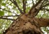 ¿Qué es la reforestación?