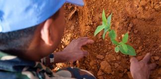 Día para la Prevención de la Explotación del Medio Ambiente en la Guerra y los Conflictos Armados