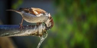 Con menos agua el hambre crece