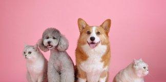 'Ciudad para las Mascotas' celebra 3 años encaminados a cumplir sus objetivos