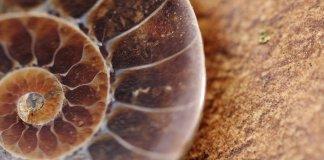 Registro fósil en CDMX: fragmentos de historia entre nosotros