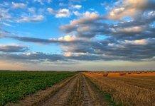 ¿Cómo la agricultura puede ser sostenible?