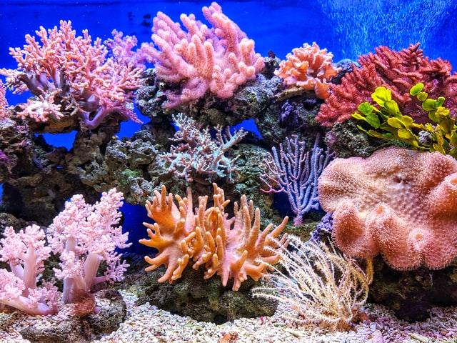 14% de los arrecifes de coral se han perdido por el aumento de la temperatura del mar