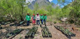 Pinol, pintando México de verde