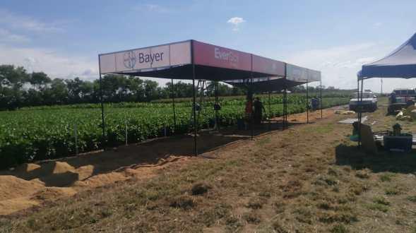 Sector agrícola boliviano es afectado por contrabando de insumos químicos.