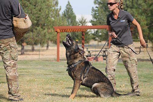 German Shepherd K9 Obedience training