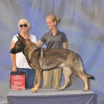 k9 competition training