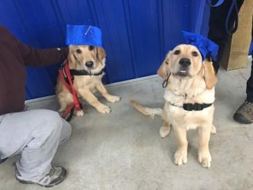 puppy class graduates