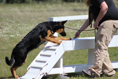 service dog training course
