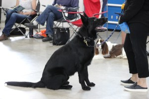 dog obedience class be your dog's leader