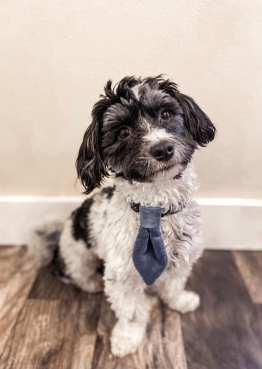 small dog training