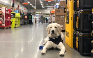 dog in home depot