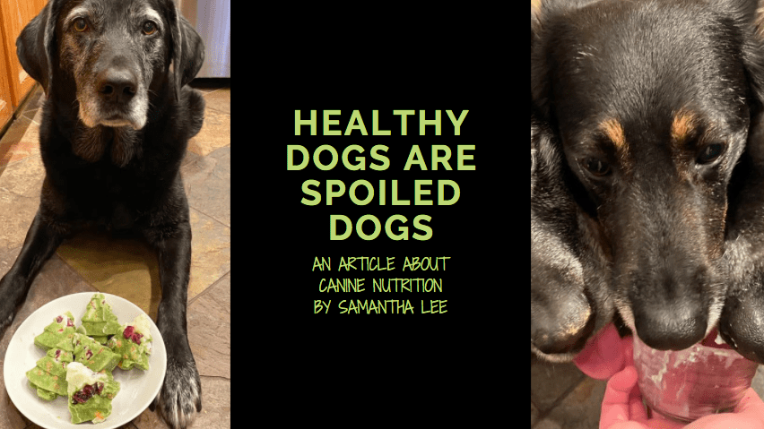 health dogs are spoiled dogs