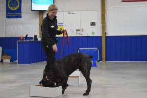 k9 nose work article