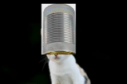 Cat with can on her head, iDashO