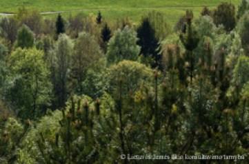 miškų