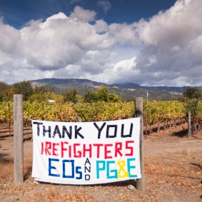 Day X: Thank you from Alexander Valley