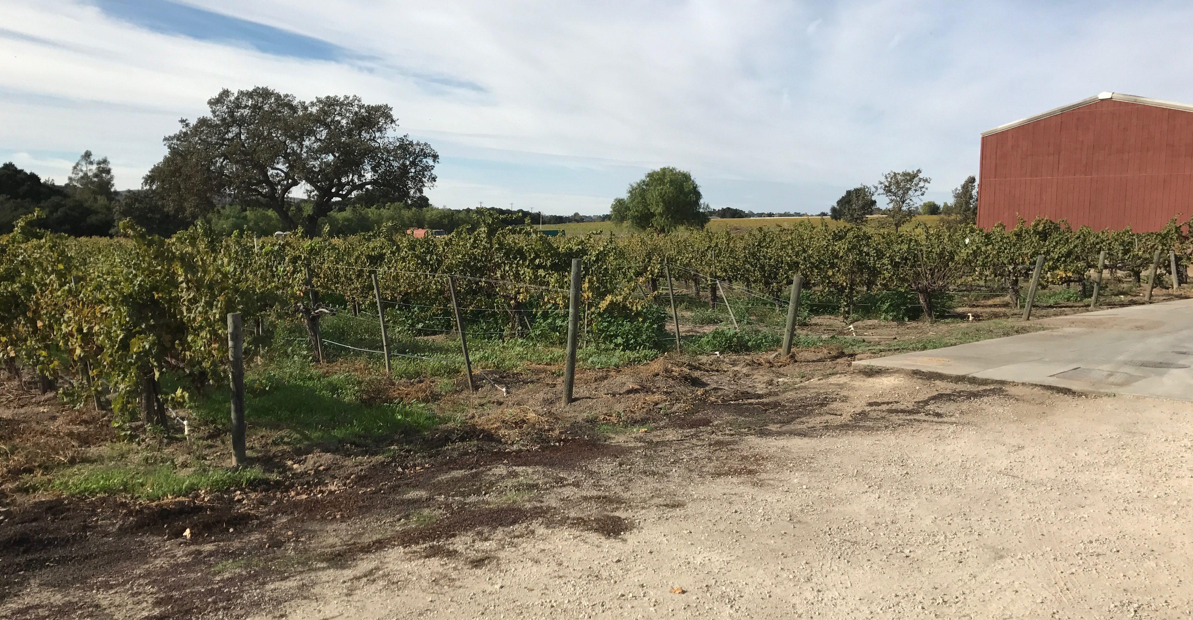 Bordeaux meets California at Brander Vineyard