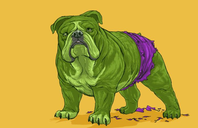 Vamers - Artistry - Fandom - Artist Josh Lynch Imagines Dogs as Superheroes from the Marvel Universe - Hulk