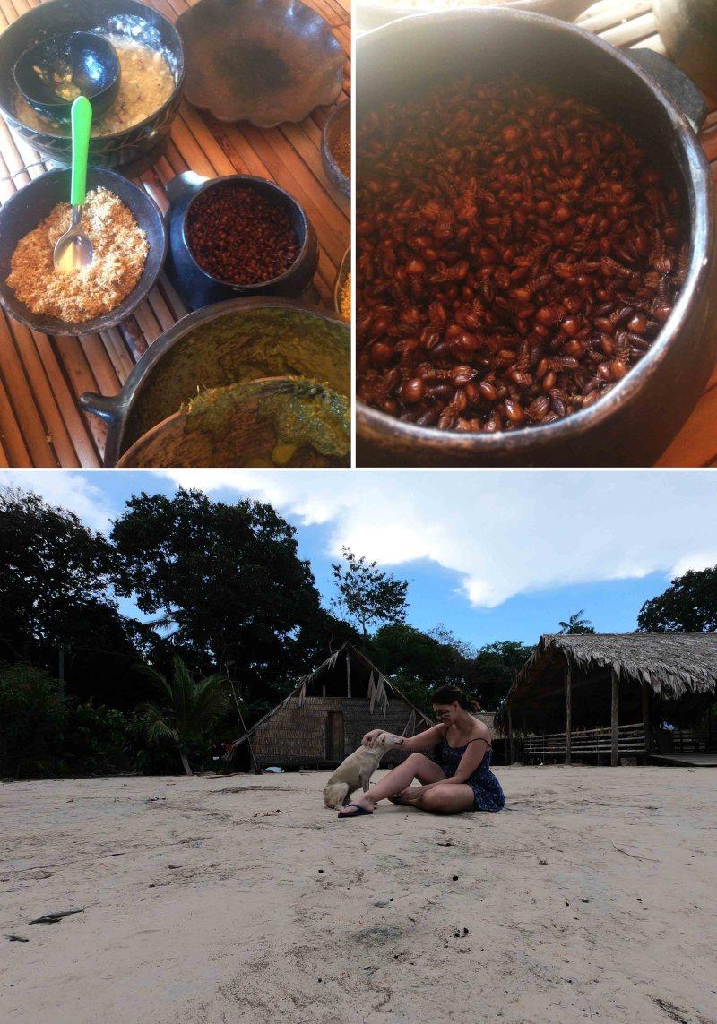 alimentos indigenas
