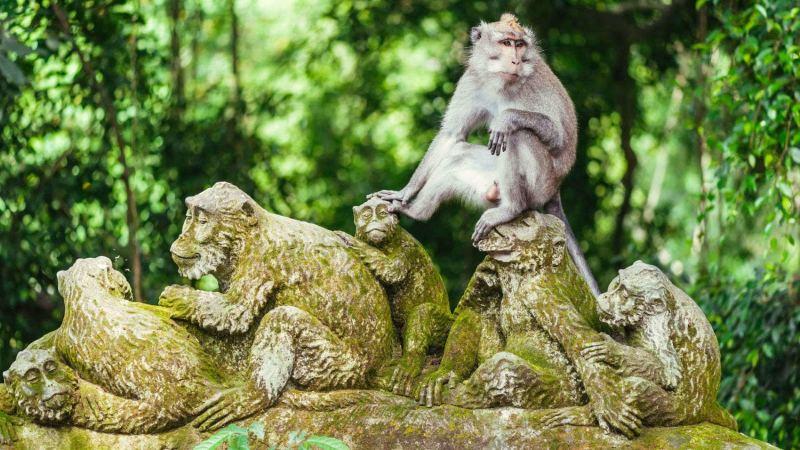 Monkey Forest é parada obrigatória.