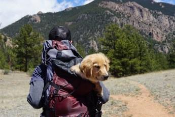 viajando com o cachorro na mochila