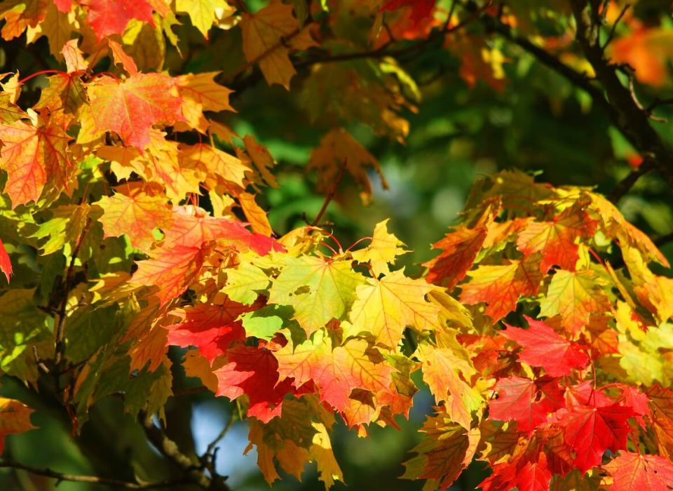 Seasons. Autumn, vamosaudioblog.com