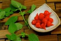 Manjericão e pimenta piquinho