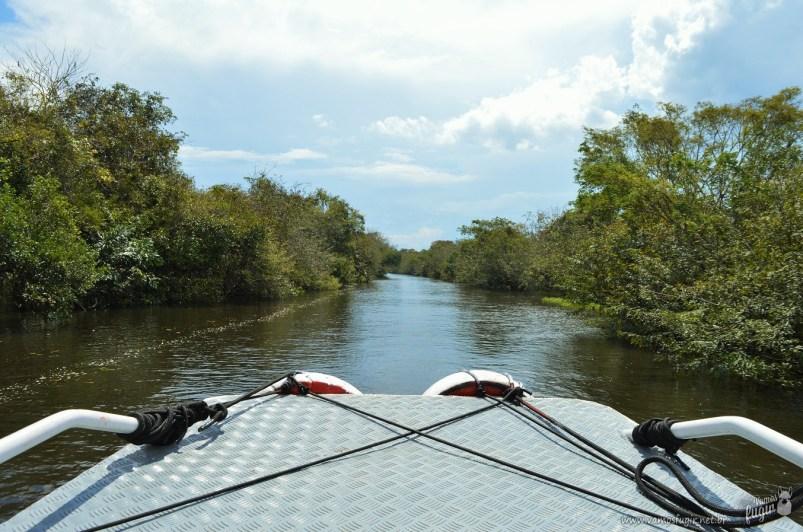 igarapé floresta amazônica