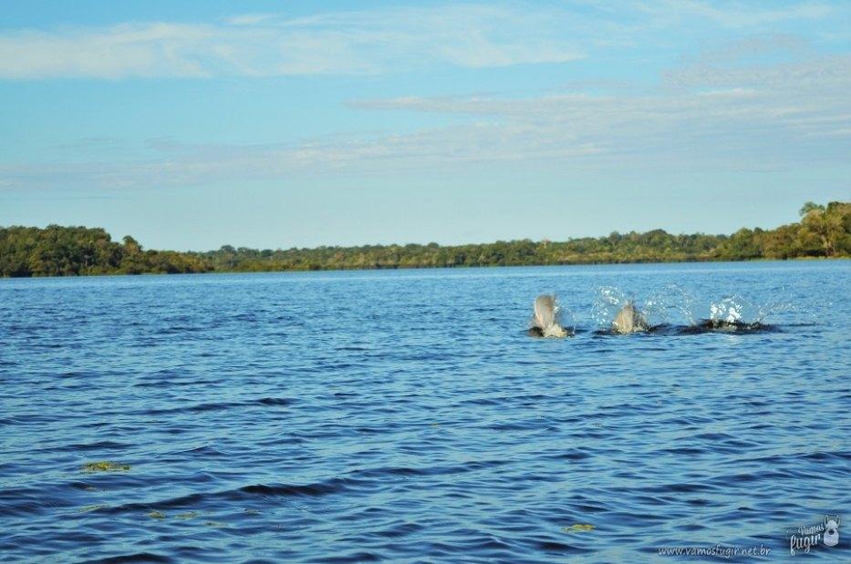 conhecer Manaus e a Floresta Amazônica