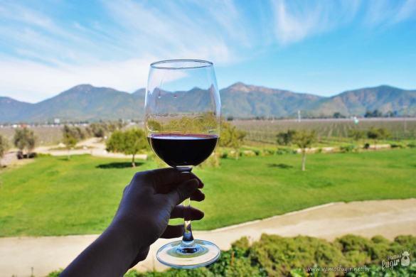 Rota do Vinho pelo Vale Casablanca