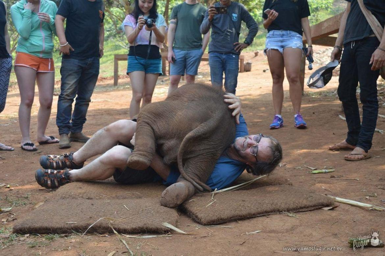 elefantes-em-chiang-mai-patara-elephant-park-1