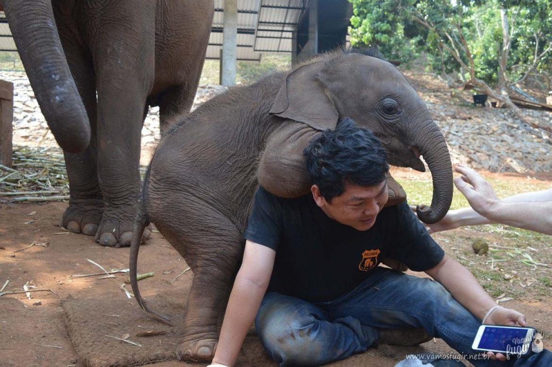 elefantes-em-chiang-mai-patara-elephant-park-10
