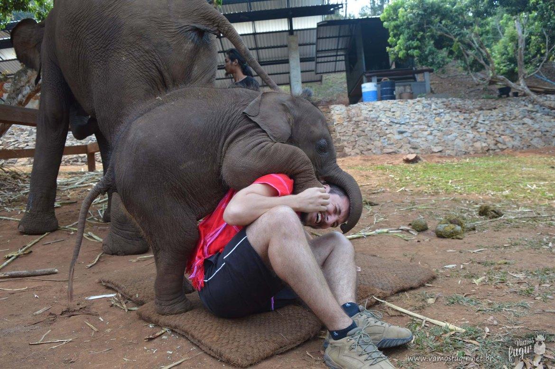 elefantes-em-chiang-mai-patara-elephant-park-5