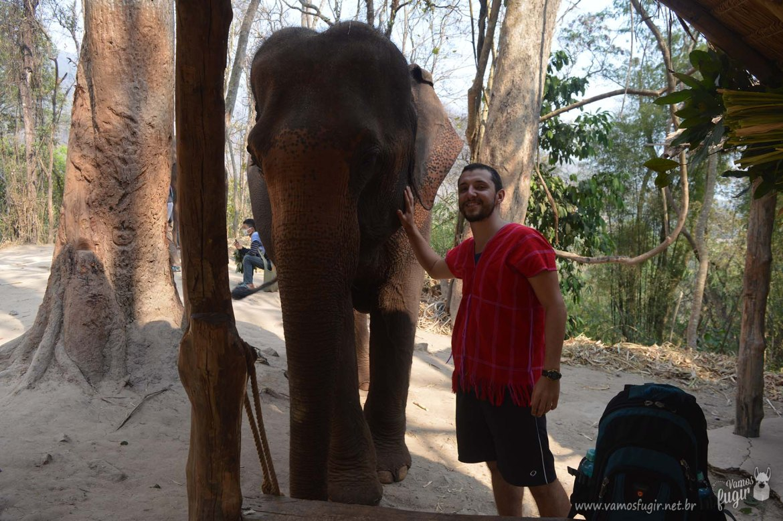 elefantes-em-chiang-mai-patara-elephant-park-7