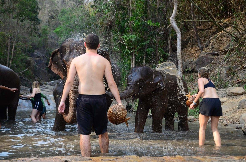 elefantes em Chiang Mai