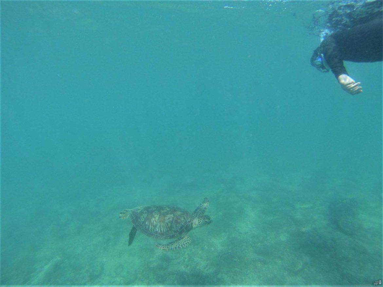 como chegar à grande barreira de corais