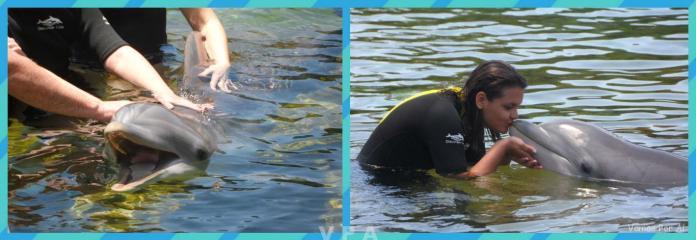 Discovery Cove: Nadando com Golfinhos