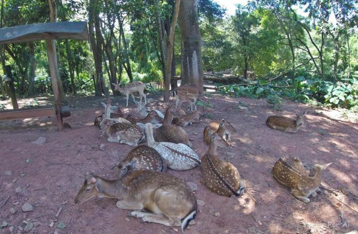 Cervos no Zoo Safari em São Paulo