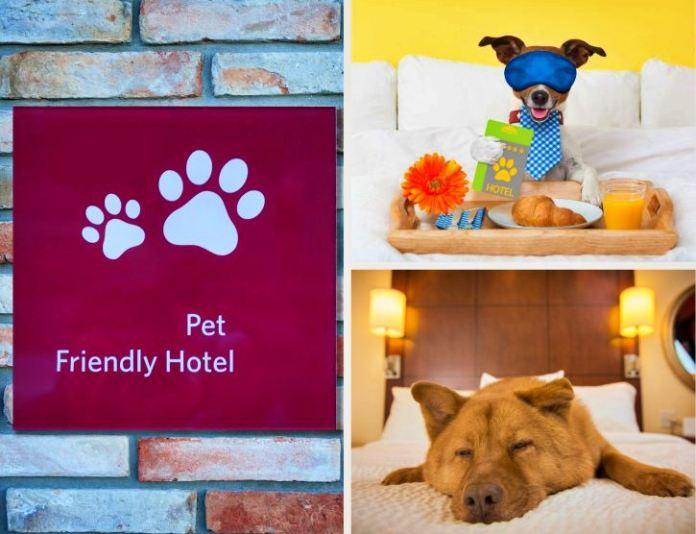 hotéis pet friendly em goias, hotéis pet friendly em goiania, hoteis pet friendly na chapada dos veadeiros