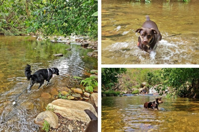 cachoeiras de pirenopolis que podem levar cachorro, cachoeira pet friendly, cachoeiras em pirenopolis