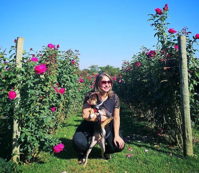 Passeio Pet friendly em Holambra, pode levar cachorro nos campos de flores de holambra,