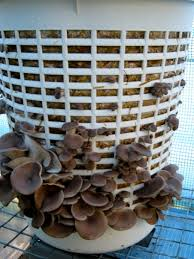 An old laudnry basket can be used as a fruiting vessel