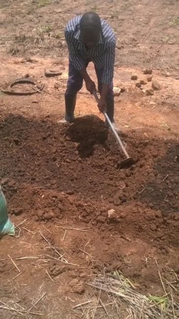 mixing in the cow dung