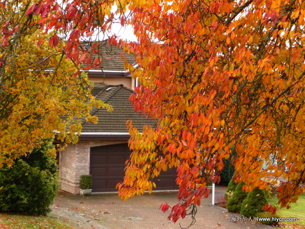 深秋风起时,红叶乱纷飞