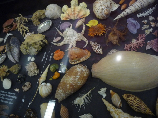 还有漂亮的贝壳