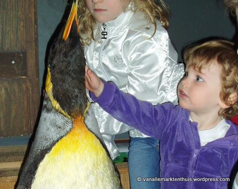 Cato aait pinguin