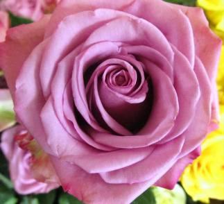 Pink Rosess